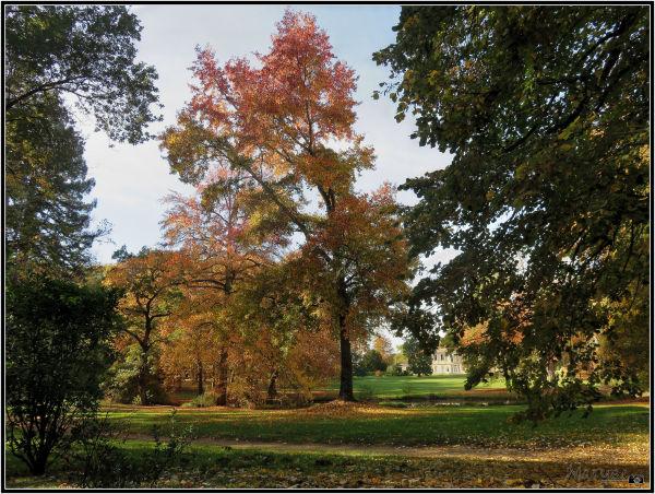 Les prémices de l'automne