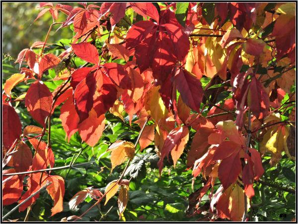 Couleurs d'automne (2)