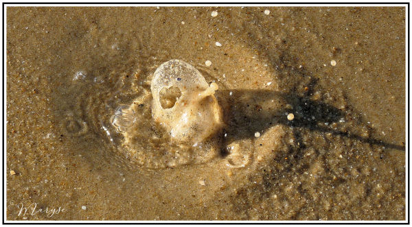 Quand le sable fait des bulles !