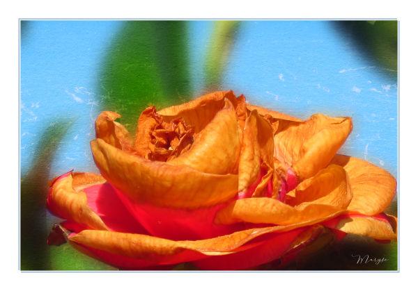La fleur de Marguerite Gautier