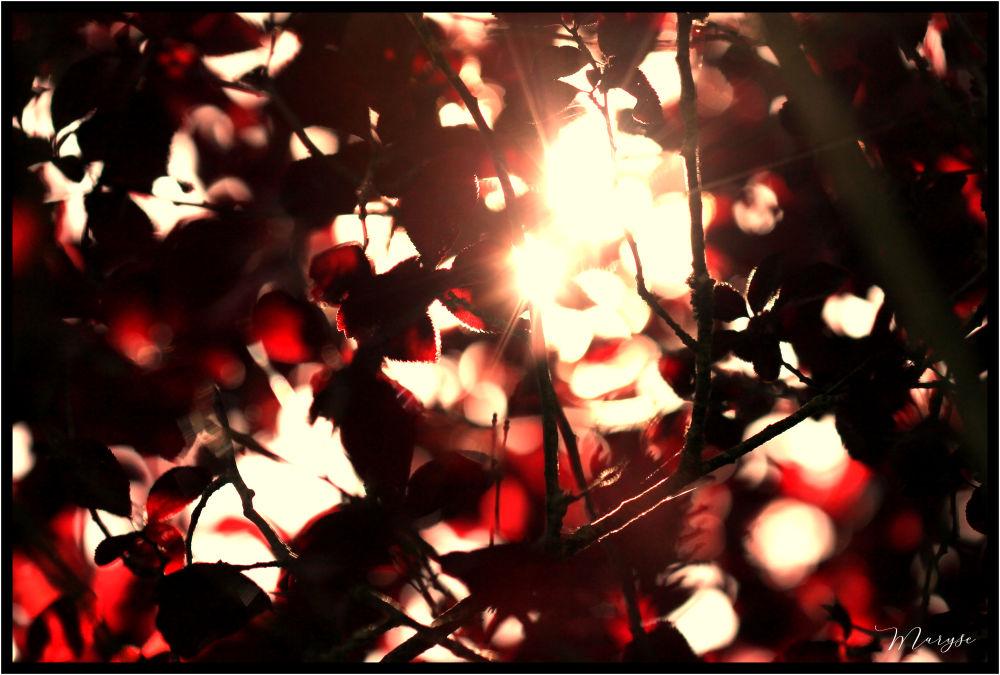 Plein soleil sous le prunus