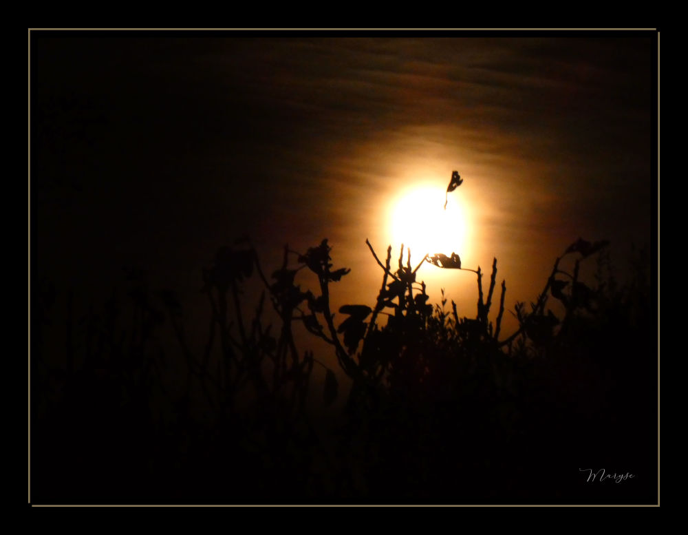 Un soir de pleine lune... 1/5