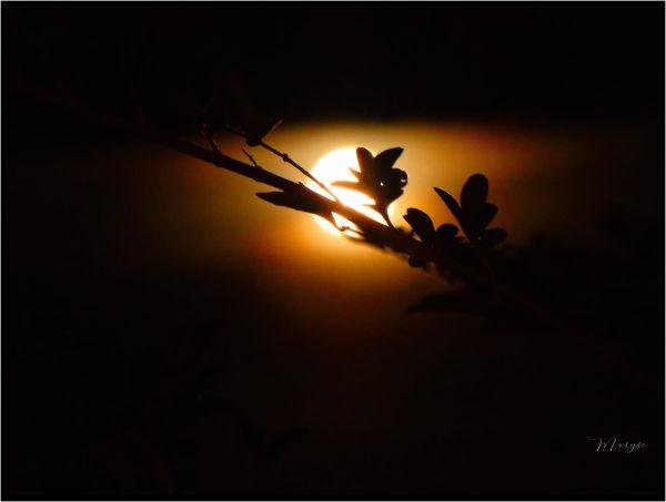 Un soir de pleine lune... 2/5