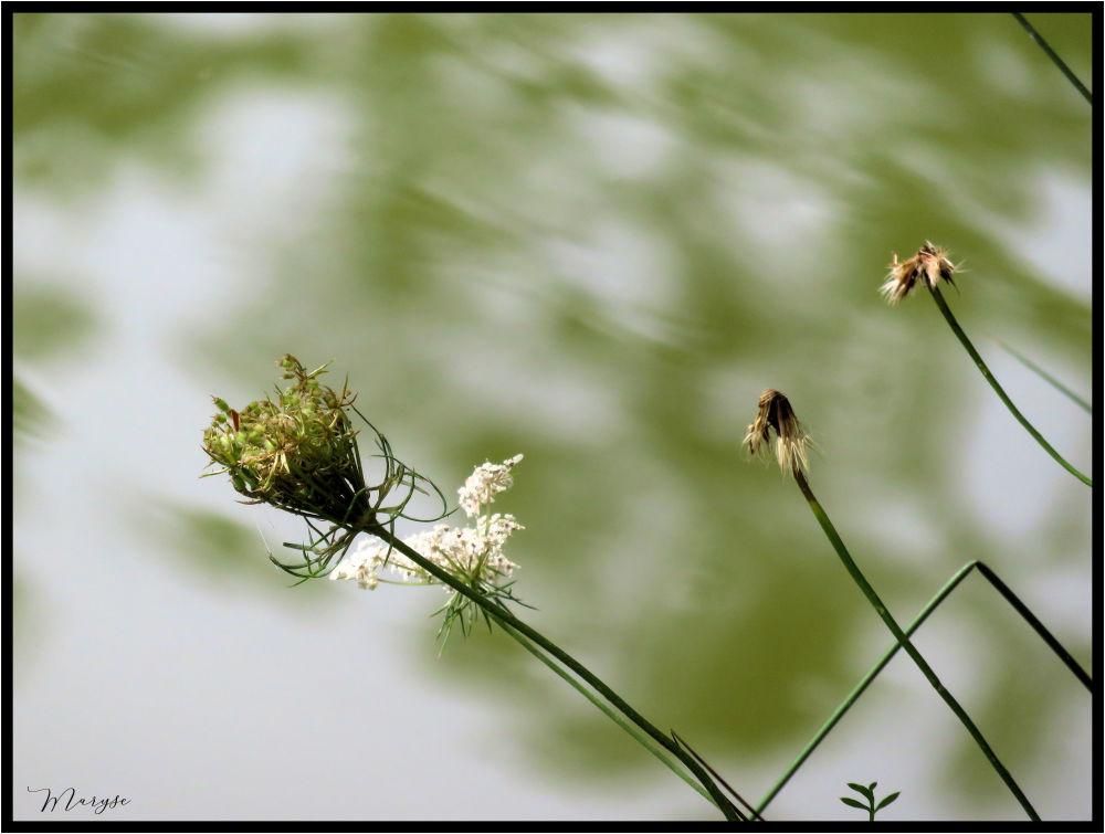 Se mirer dans le lac