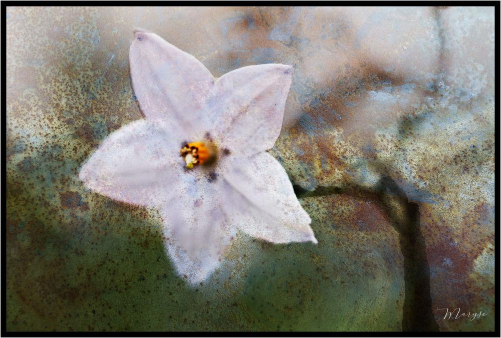 Fleur de rouille