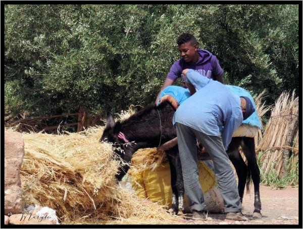 Charger la mule !