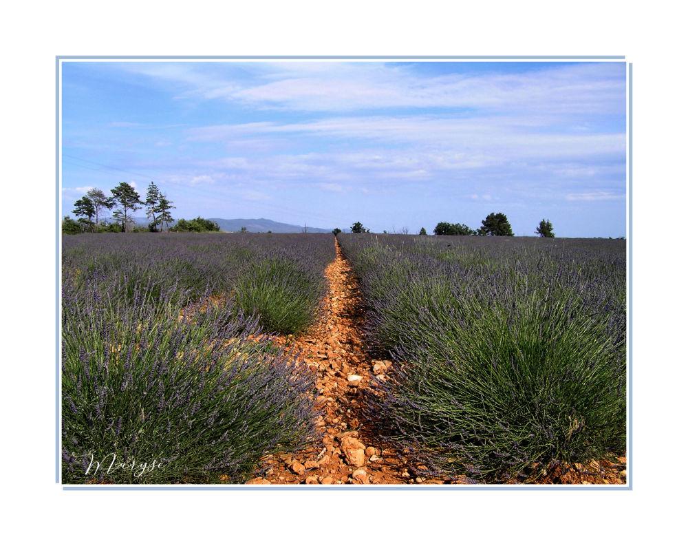 Un air de Provence.....
