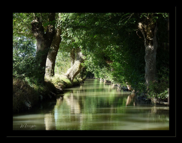 Le Marais Poitevin - 2