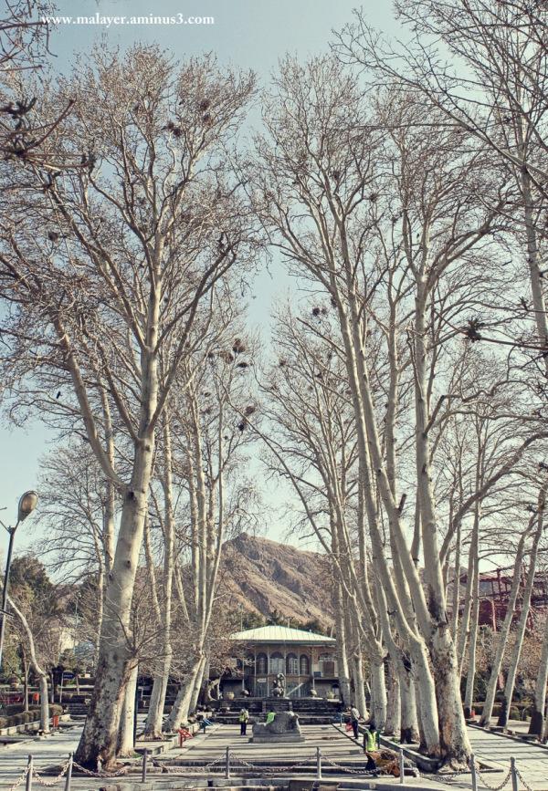 پارک سیفیه