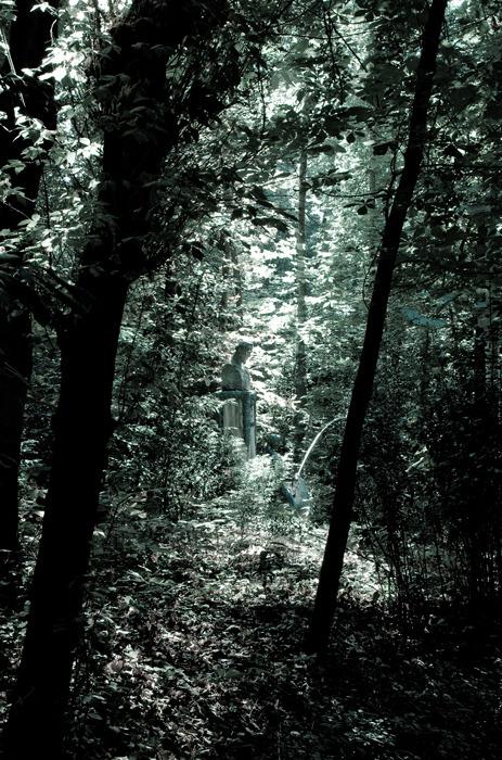 Bustos en la selva