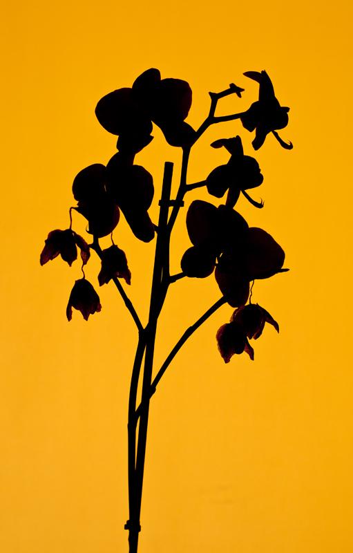 Florquideal
