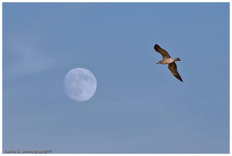 Voando á Lua