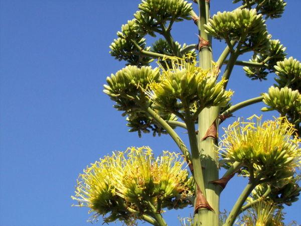 Bunga Langka