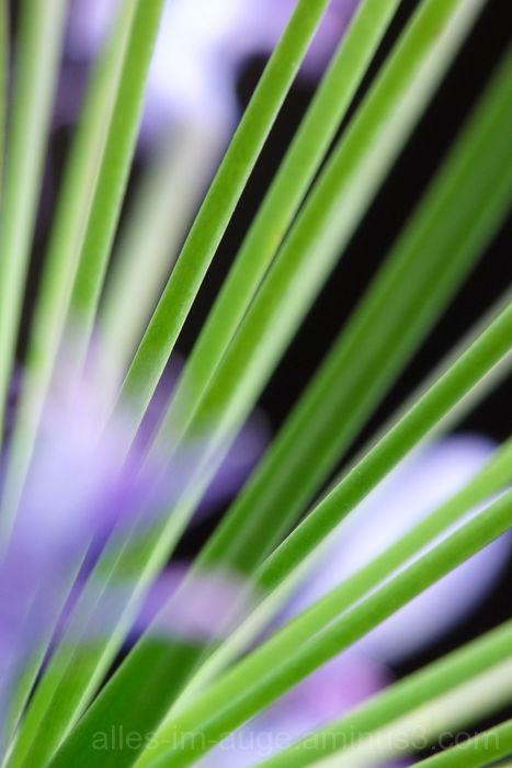 flower mikado