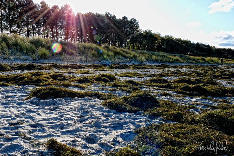 seaweed in the sun