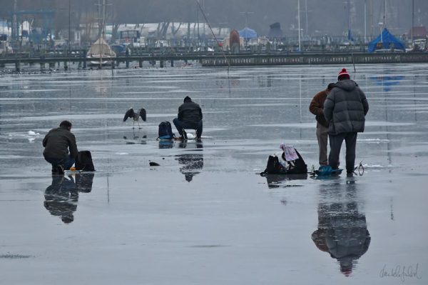 icefishing with heron