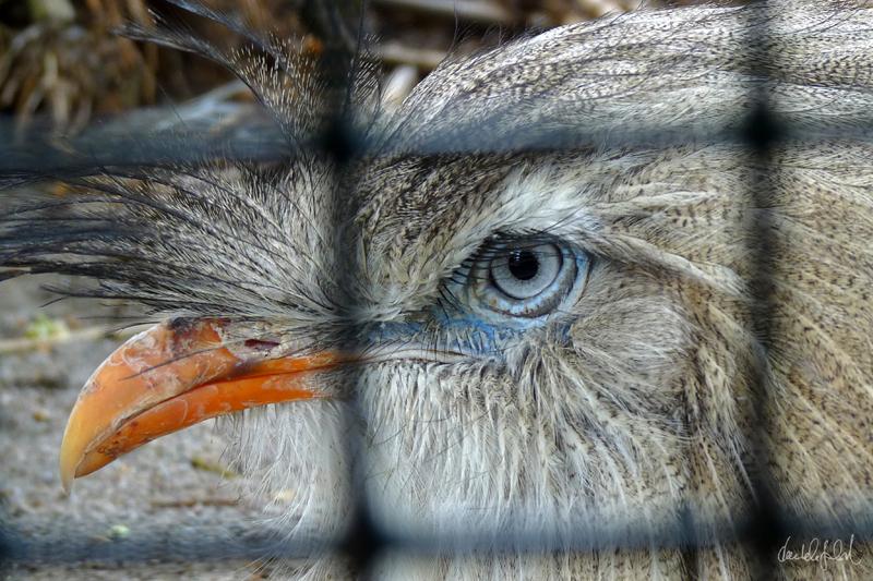 beauty behind bars