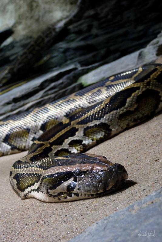 zig zag python