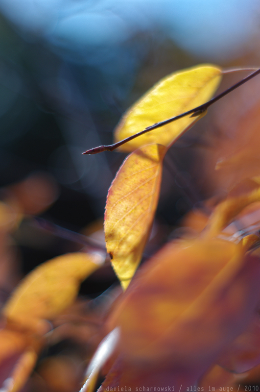 colours of autumn ii