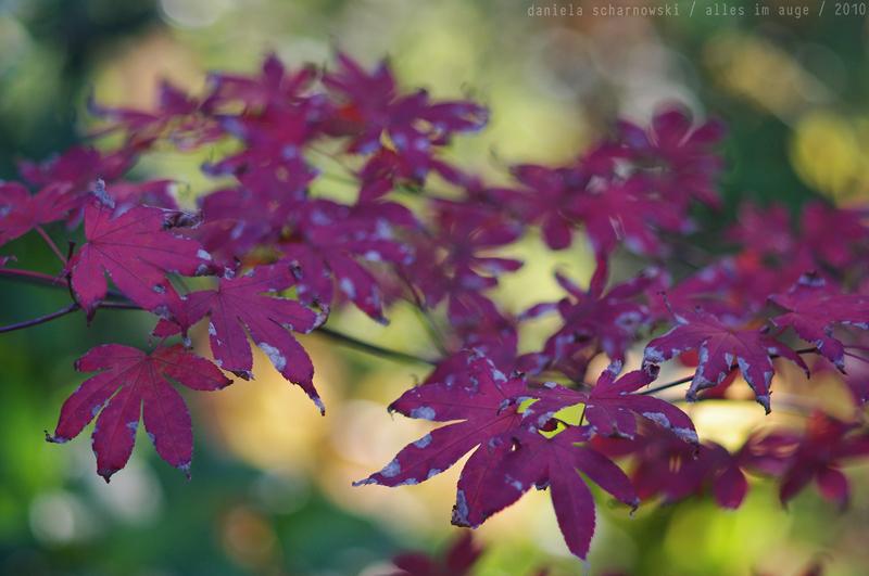 colours of autumn iii