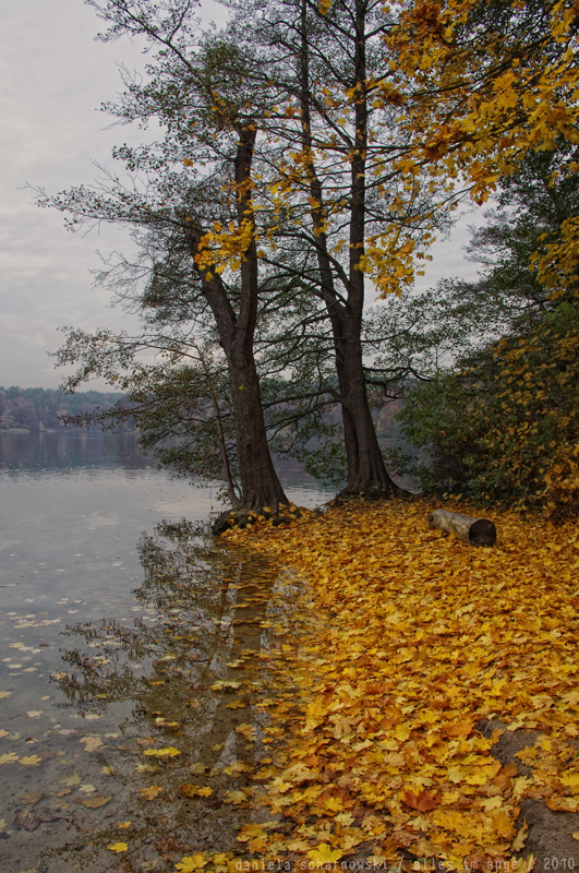 yellow lakeside