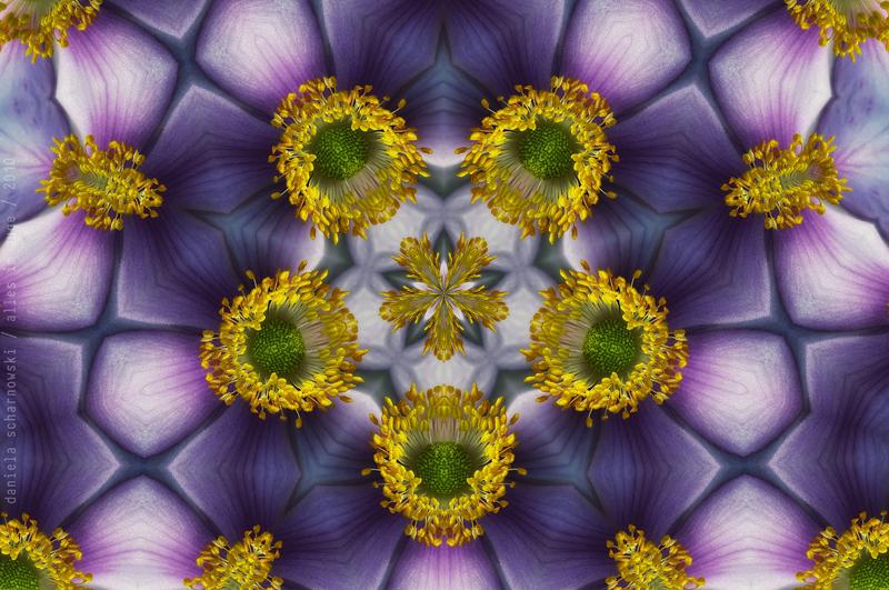 blooming mandala