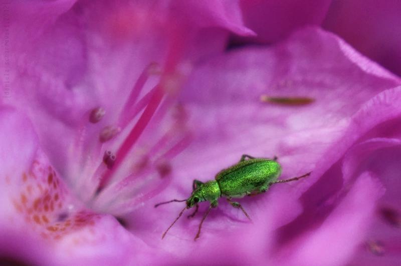 weevils walk