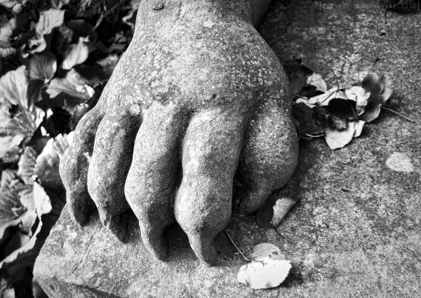 Sphinx paw