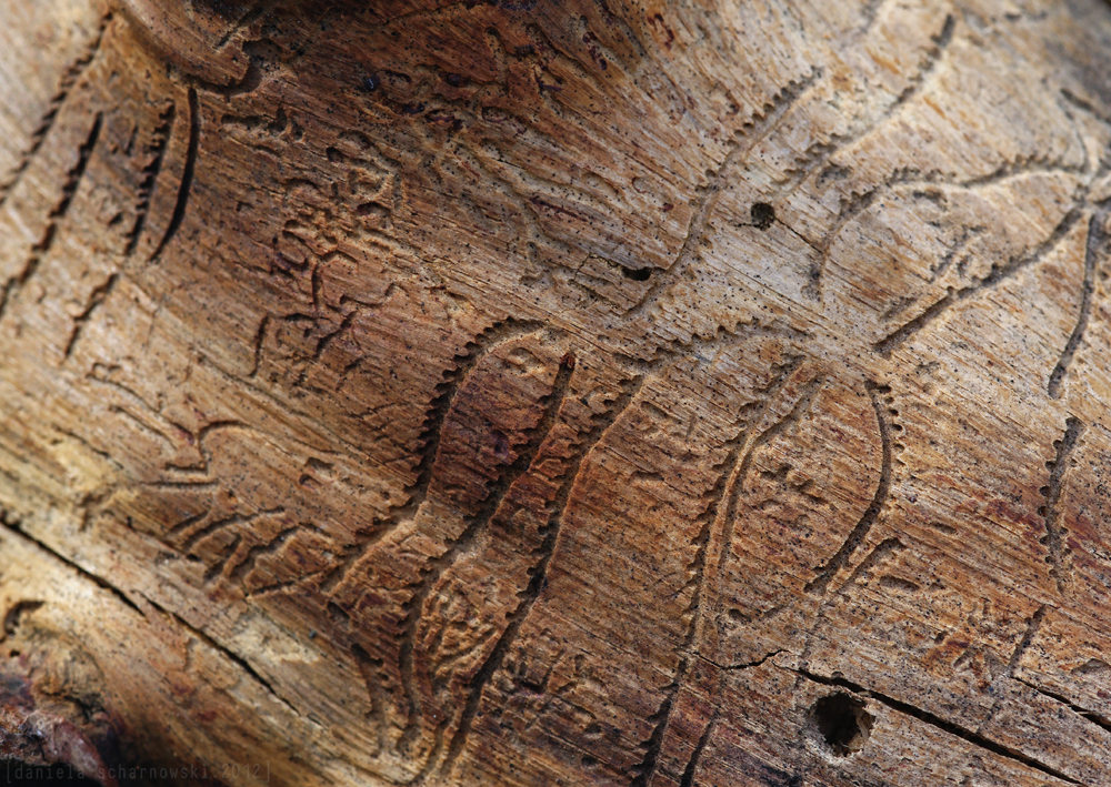 insect glyphs