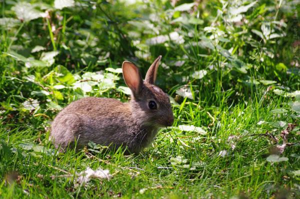 Rabbit at the Tiergarten