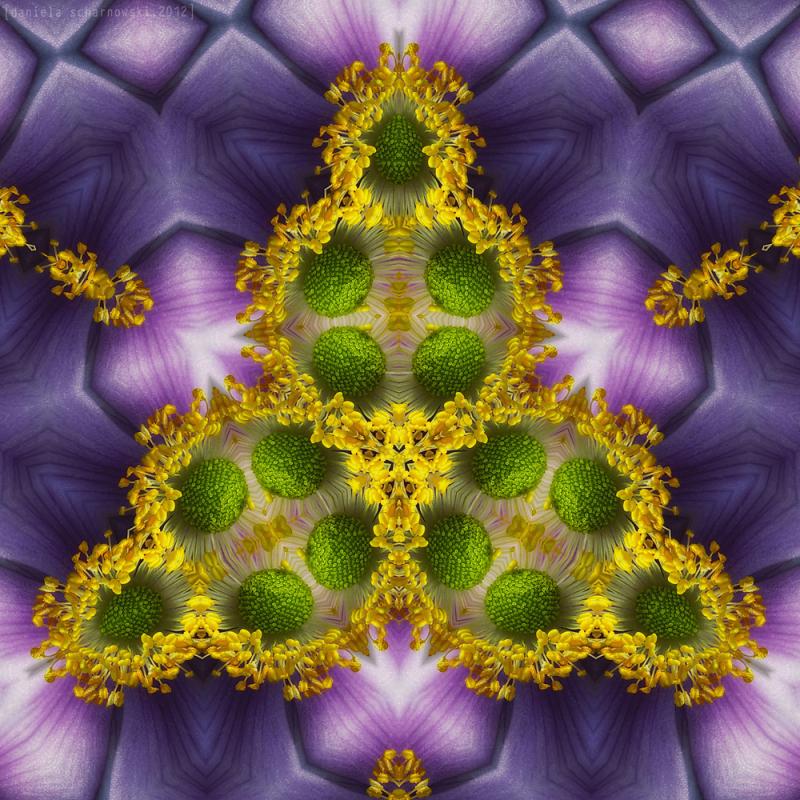 anemonescope