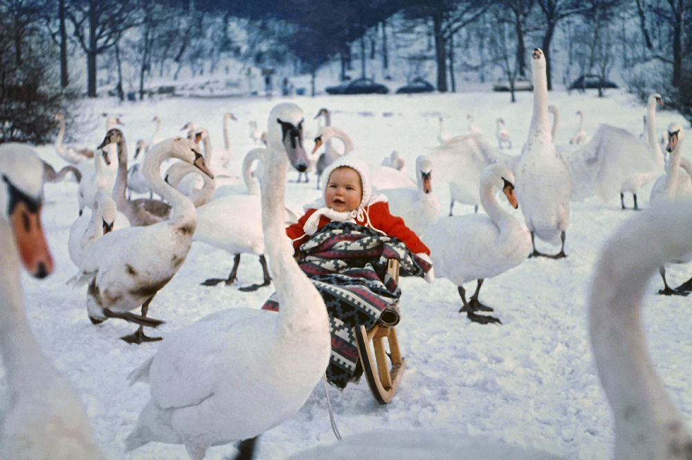Baby-me and swans :)