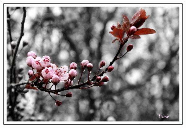 Une rosée