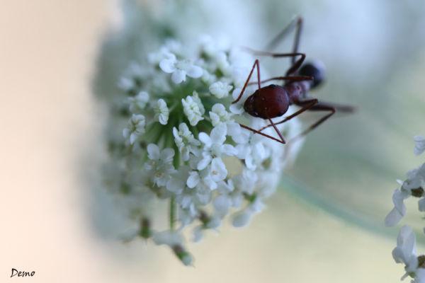 Nectare...