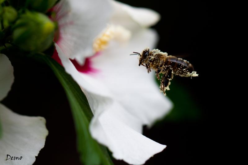 Sac de pollen
