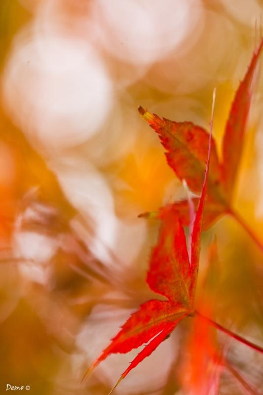 Parfum d'automne (3)