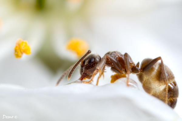 Une toute petite fourmis