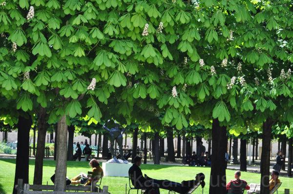 ...a green siesta, Paris