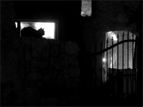 La nuit, tous les chats sont grilles