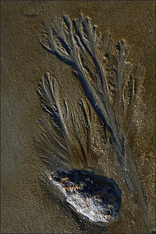 Au fil du sable -29