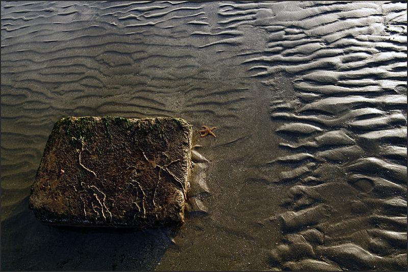 Etoile de sable