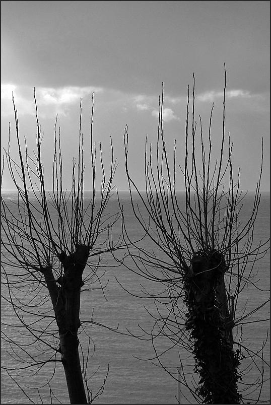 Arbres à baie (3)