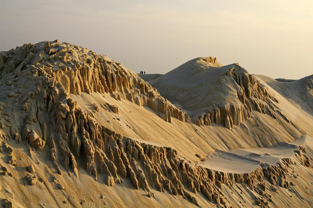 Fourmis des sables