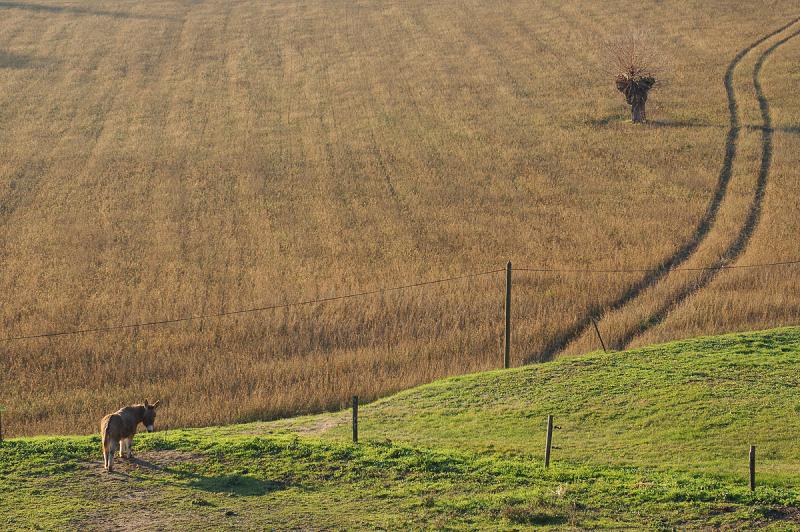 L'âne et l'arbre
