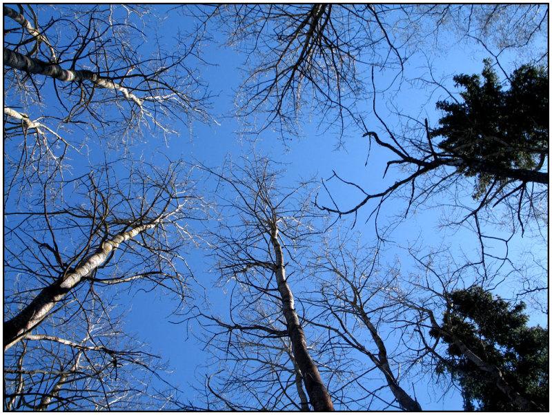 branchs