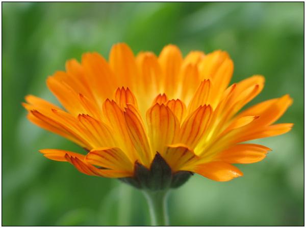 Flower, summer