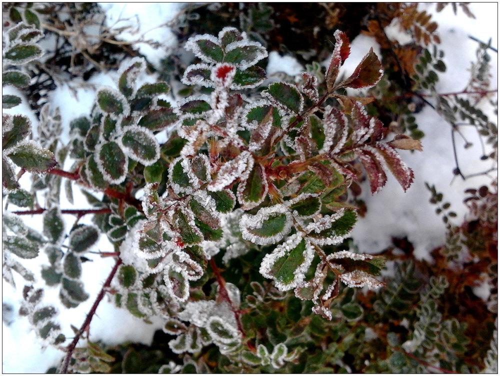 Winter, forst