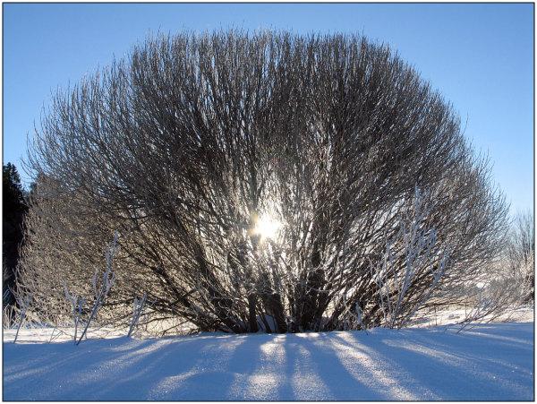 Winter, sun