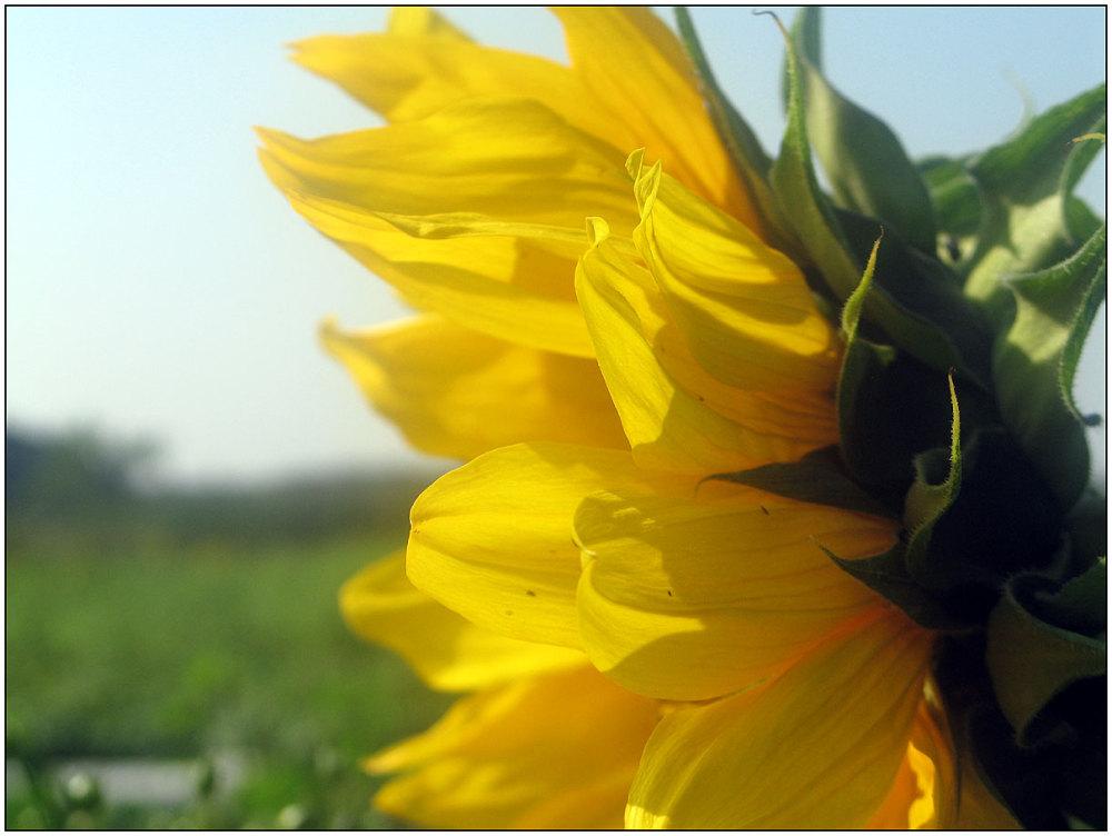 Summer, flowers