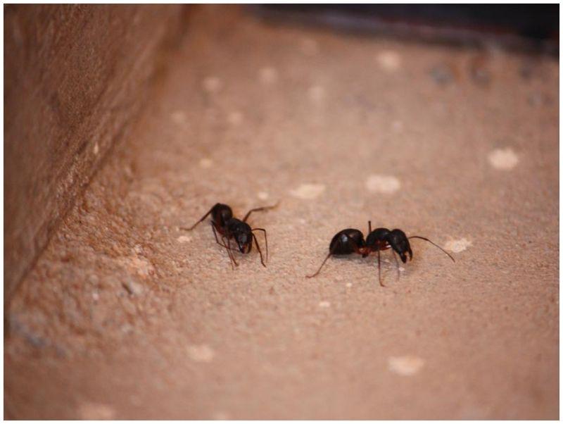 Ants..